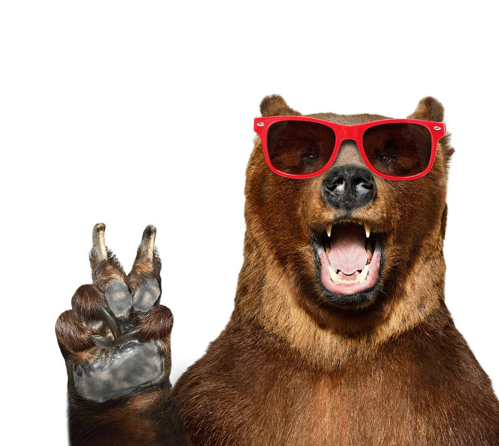 Funny bear and lion in sunglasses
